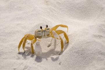 Sand Crab 950