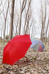 sonbahar ve şemsiye