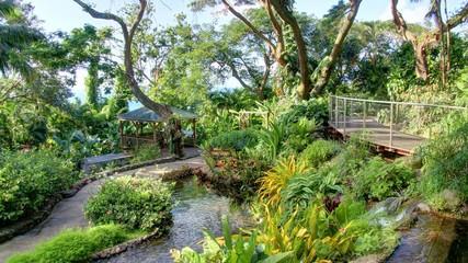 jardin exotique et cascade de la Guadeloupe