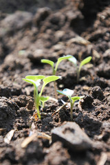 Soft grains on the soil, the concept of growth.