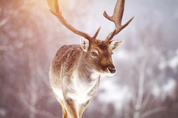 Deer in wintertime Wall mural