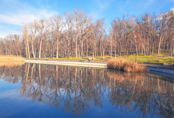 urban park in the spring, trees reflection in the lake water