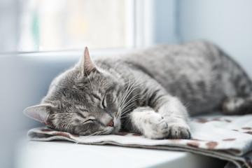 Domestic Cat sleeping   Wall mural