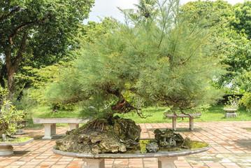 bonsai inside the pagoda Thien Mu in the city of Hue, Vietnam.