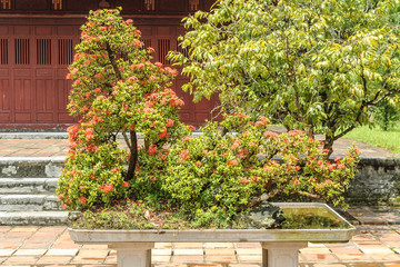 bonsai inside the pagoda Thien Mu in the city of Hue, Vietnam.