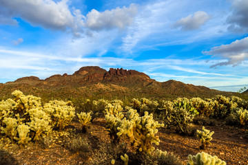 This is Vulture Peak, near Wickenburg, Arizona,, taken from about 1 mile away from the trailhead. The beautiful chollas in the foreground were almost in full bloom.