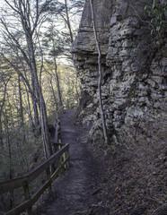 walking path through nature