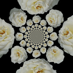 collage (pattern) of a white rose on a black background
