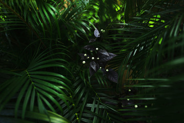 Fotomurales - dark exotic fantastic portrait of green palm leaves plants and flower in Thailand. concept of travel, phone or laptop wallpaper background