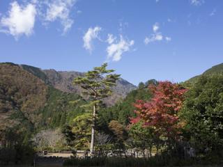 松の木と紅葉