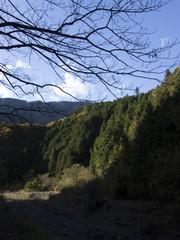 枯れ木と山