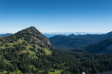 Green Meadows of Summer in Mount Rainier