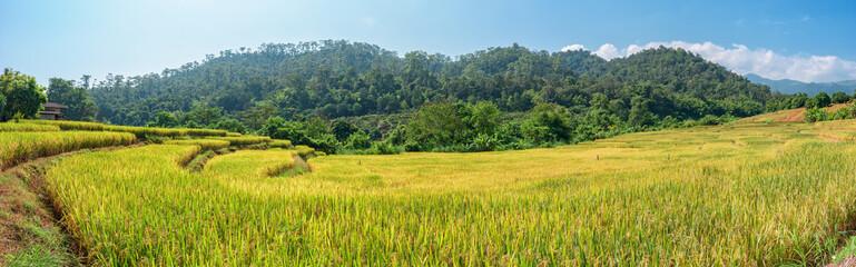 Autocollant pour porte Les champs de riz Rice fields on terraced of Chiang Mai, Thailand. Panoramic views