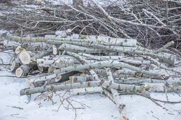 sawnwood, lie on a snow log