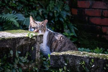 Stray Cats Outdoors