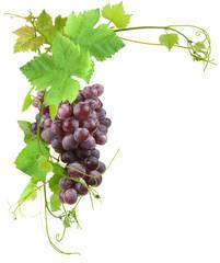 grappe de raisin et vigne