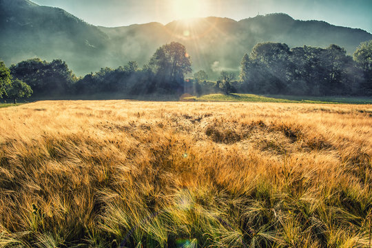Wild grass field in the mountain valley