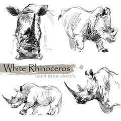 White Rhinoceros hand draw sketch. Wild animal illustration.