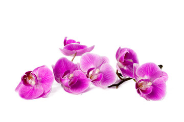 Tuinposter Orchidee orchid isolated on white