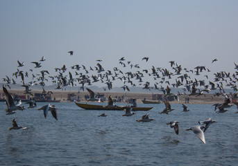 A flock of seagulls in the background of boats on the Ganges River in Varanasi