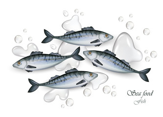 Sprat fishes Vector Realistic fresh. Water splash 3d illustrations