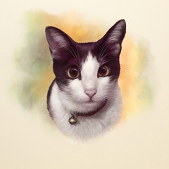 Cute black and white cat with big eyes. Portrait of a cat. Realistic drawing of a cat on the watercolor background. Good for print T-shirt, banner, cover, card. Hand painted animal illustration.