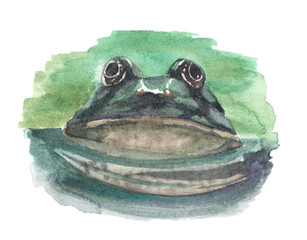 Watercolor frog. Watercolor illustration of Head of frog with big eyes. Eyed toad sit in the water