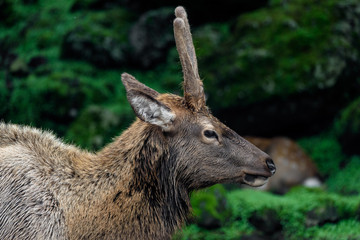 Deer in dark forest close up