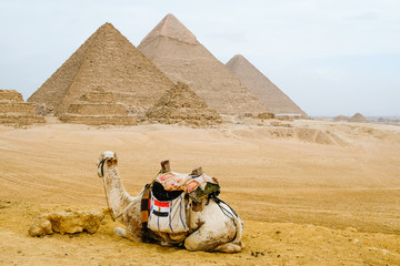 Camel sitting in front of the pyramids at Giza, Egypt