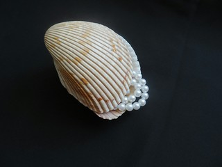 Pearls in the seashell