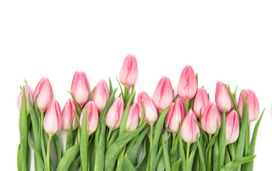 Fresh pink tulips Flowers bouquet isolated white background