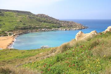 Gnejna Bay, Malta, Wildblumen, Frühling, Westküste