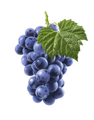 Big bunch of blue grapes isolated on white background