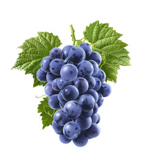 Blue grapes isolated on white background. Vertical composition