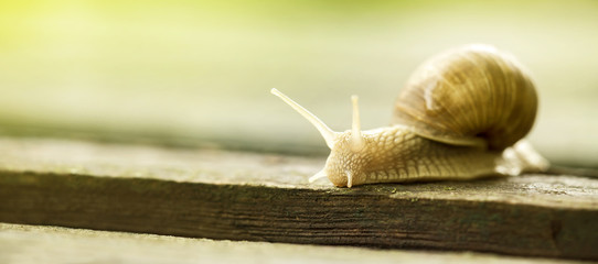 Web banner of a slow slimy snail