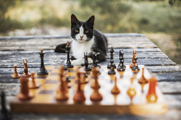 Portrait of cat sitting on wooden table with chess pieces in foreground at backyard