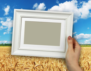 Wooden frame in woman hands on the background wheat field
