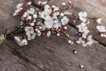A branch of a cherry blossom lies on a wooden texture table