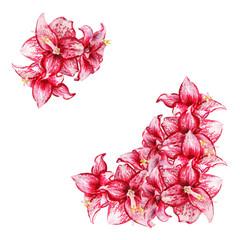 amaryllis flowers card