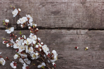 Textured wooden background on which lies a flowering branch of apricots
