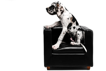 Dog sits in a chair and looks to the left.