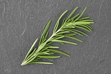 Sprig of rosemary on a dark background. Top view.