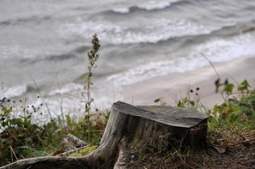 Ścięty pień drzewa na tle morza