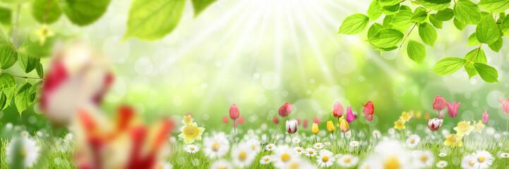 Frühling 432
