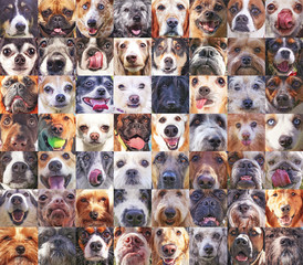 56 dog heads in a poster showing the faces of various breeds up close toned with a retro vintage instagram filter