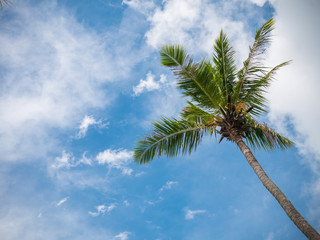 Coconut Tree against Blue Sky on the Beach