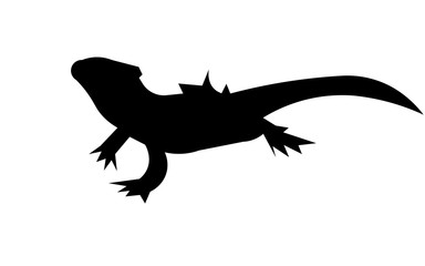bearded dragon silhouette on white background