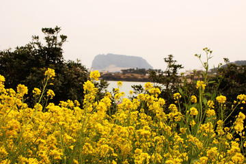 Beautiful Scenery of Jeju Island / Scenery Picture of Jeju Island, Korea