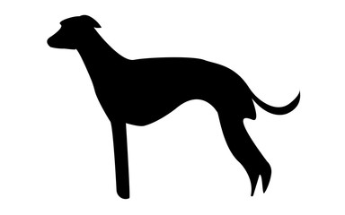 whippet silhouette on white background