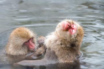 露天風呂に入るニホンザル